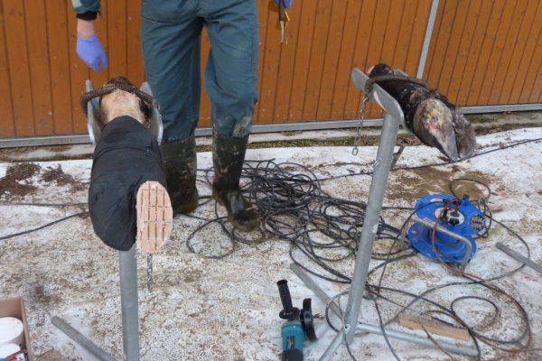 Übungsklaue mit Verband und Holzklotz